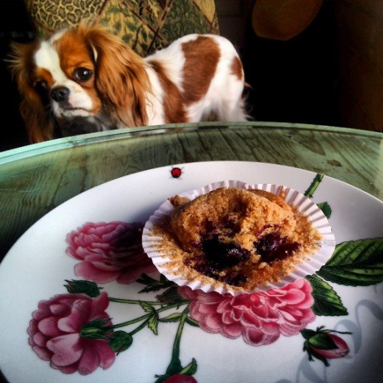 Punkie and the Blueberry Muffin